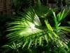 23-palma-livinsgtonia