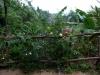 30-vegetacion-del-yunque-de-regreso-en-la-mitad-del-camino