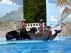 5-show-con-animales-marinos