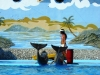 8-show-con-animales-marinos