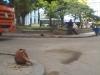 Cabeza de cerdo en vasija esquina al Parque Cervantes Habana Vieja.