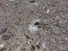 animal-muerto-entre-las-piedras-de-la-playa-victima-de-las-ofrendas-religiosas