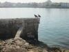 aves-sobre-muro