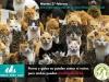 postal-pac-dia-mundial-esterilizacion-animal