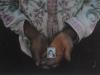 jonas04 Daniel sostiene en sus manos una fotografía de su padre asesinado por el Ejército en 1982