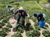 agricultores de trujillo, venezuela