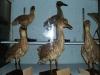 6-museo-de-historia-natural