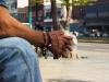 manos de hombre en gato negro