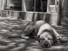 perro callejero en catia