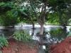 Arroyo y laguna de aguas negras en una céntrica calle de Alamar.