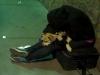 san-diego-muchacha-homeless-durmiendo-con-su-perro