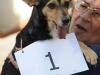 11-gandador-del-concurso-por-el-perro-mas-lindo