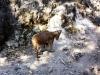 20-cabra-montes