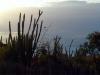 La vegetación ya no es la misma, ahora se aprecian cactus y otras plantas de lo mas raras.