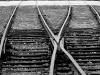 trenes-19
