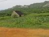 cultivos-de-mario