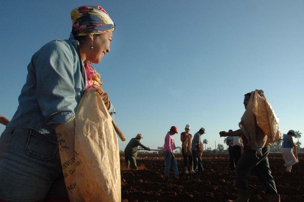 El campo cubano.  Photo: Caridad