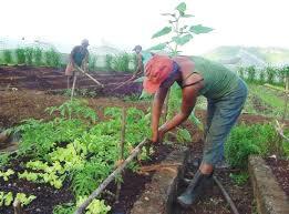 Foto: trabajadores.cu