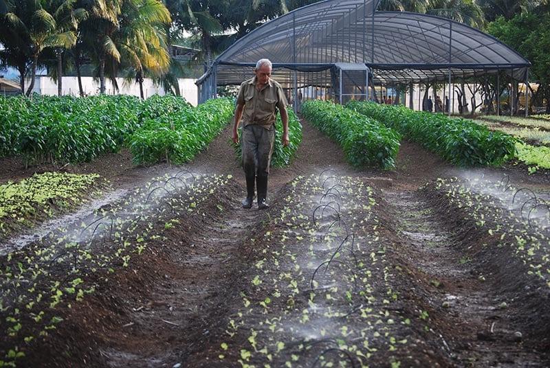 Será difícil que los campesinos cubanos acepten que les quiten las tierras que les dieron a sus abuelos.