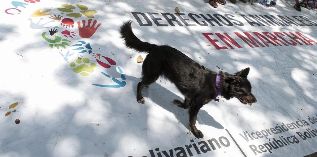 Marcha por los Derechos de los animales - Caracas