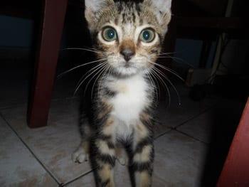 Gato-yanelys
