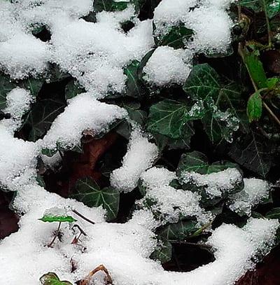 nieve-2