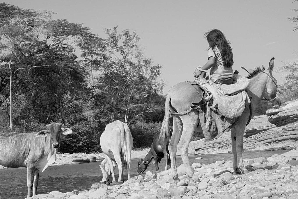 """Niña lleva sus vacas a beber al río socuy. La comunidad Wayuma'ana, de indígenas wayuu y criollos venezolanos, se mantiene en resguardo de la tierra y el río Socuy, (en Mara, Zulia, Venezuela) para evitar que el gobierno realice la explotación, a cielo abierto, del carbón mineral abundante en ese territorio. Ya la Mina Norte ha contaminado las aguas del río Guasare. El calentamiento provocado por esta Mina - cercana también a la comunidad Wayuma'ana - ha provocado intensas sequías en la zona con severas consecuencias para estas familias. Maikiraalasalii en wayunaiki quiere decir """"los que no se venden"""", la gente de esta comunidad se reconoce con este nombre por su resistencia y empeño en resguardar su territorio."""