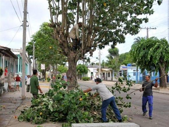 Poda de arboles en Santiago de Cuba en preparación por el pase del huracán Matthew. foto: cubadebate.cu