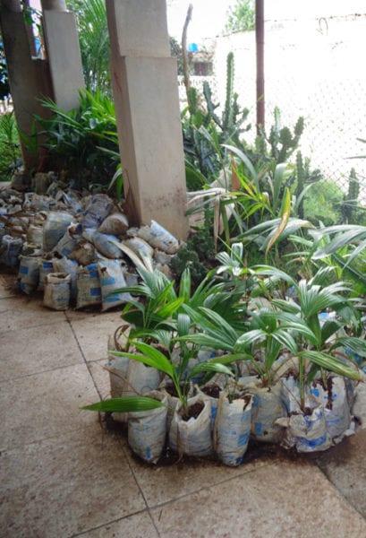 Posturas de plantas ornamentales.