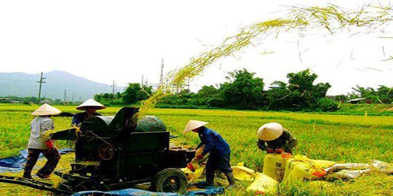 Los campesinos vietnamitas han alcanzado altos niveles de productividad.