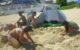 Trabajando la arena