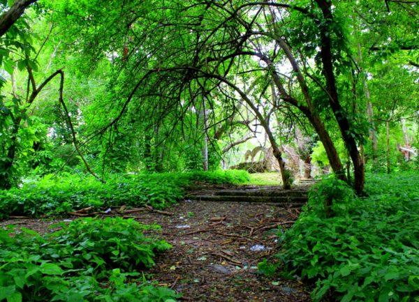 El bosque de La Habana (fotorreportaje)