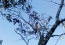 Gato Pájaro, Cuba – Foto del día